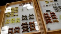 Cal-Poly Insect Fair - 2014