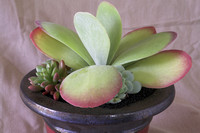 stock_products1_cactus-DSC06110-01