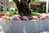 ct_landscaping-flowerbed-DSC00693